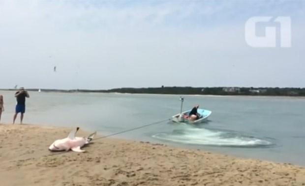 Tubarão ficou encalhado ao tentar capturar gaivota (Foto: Reuters)