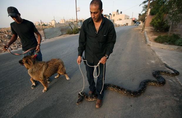 Palestino foi flagrado passeando com cobra enorme na coleira (Foto: Abbas Momani/AFP)