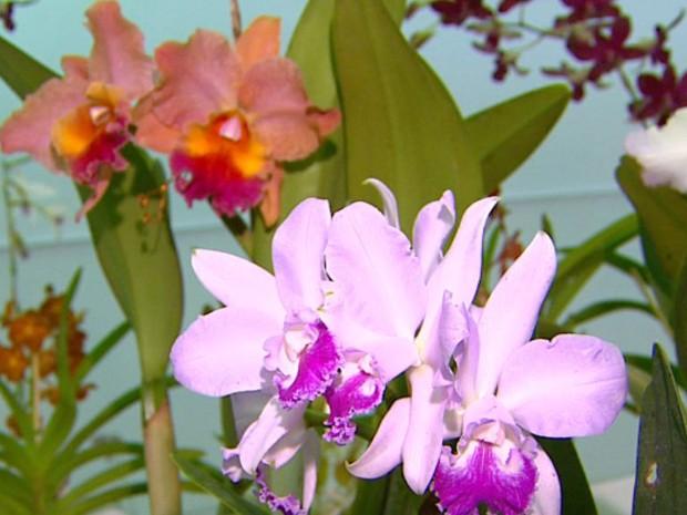 Critérios para escolher melhores plantas incluem formato e quantidade de flores (Foto: Reprodução)