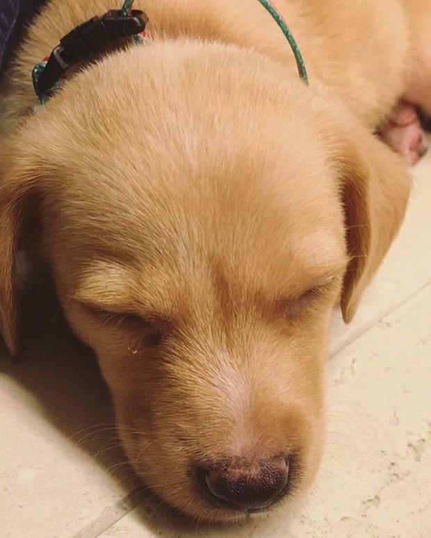 Flora, cachorrinha adotada por Fátima Bernardes (Foto: Reprodução/Instagram)