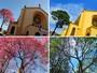 Ipês-rosas são clicados em duas fases por morador de São Carlos