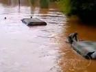 Nova York e Nova Jersey querem ajuda federal após furacão