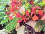 Fernanda Souza faz foto em jardim florido e arranca elogios dos fãs