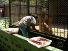 Animais do Zoo de Volta Redonda ganham cardápio especial no verão