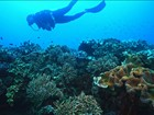 Família Schurmann mergulha na Grande Barreira de Corais