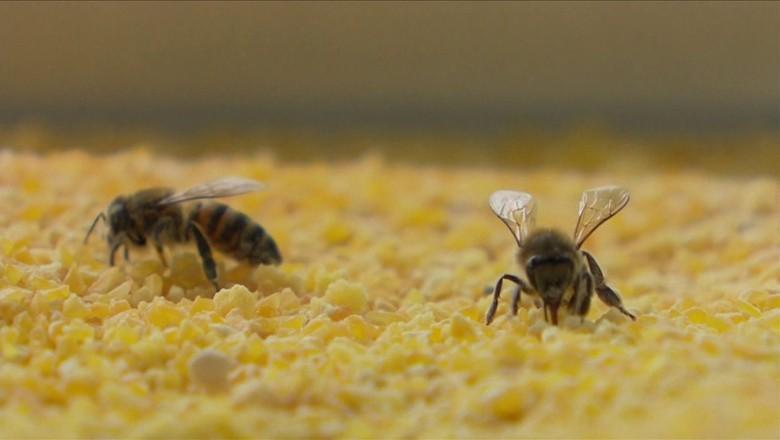 canjiquinha-quirera-abelha (Foto: Reprodução/TV Globo)