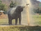 Elefante cria 'lava a jato' particular após quebrar cano em parque