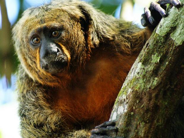 """""""Uma das mais importantes e gratificantes missões do Zôo do CIGS é zelar pela preservação e manutenção da biologia das espécies"""", disse capitão Palhari (Foto: Tiago Melo/G1 AM)"""