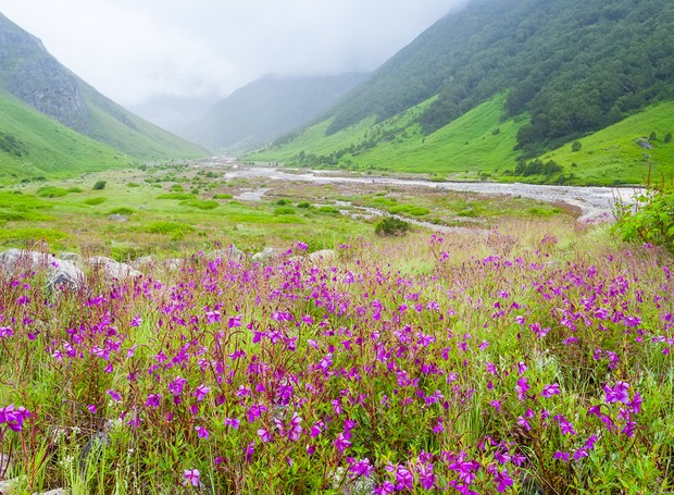 9-lugares-coloridos-valley-of-flowers-india-himalaias (Foto: Thinkstock)