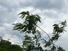 Temperaturas sobem e possibilidade de chuva fica menor no oeste de MS