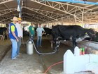 Em Rondônia, arroba de vaca gorda custa, em média, R$ 118,97
