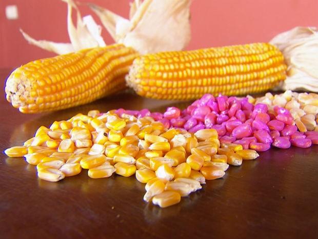 Sementes orgânicas são cultivadas sem pesticidas (Foto: Reprodução/TV TEM)