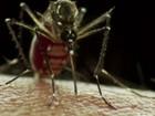 Número de casos confirmados de dengue chega a 3.088 em Friburgo