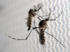 Espírito Santo tem 2,8 mil casos de vírus da zika até setembro de 2016
