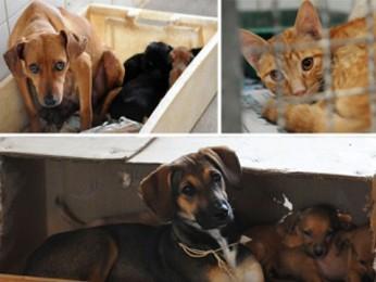 Gatos e cachorros que foram abandonados poderão ser adotados neste domingo (Foto: Mariana Raphael/Agência Brasília)