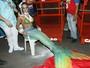 Shayene Cesário vira sereia e mostra ótima forma na Sapucaí