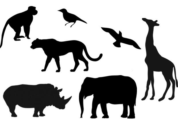 moldes animais (Foto: Stephanie Ades)