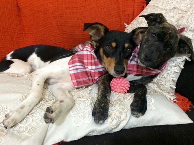 As cachorrinhas LAdy e Luna estão sempre juntas para se protegerem do frio (Foto: Deborah Vinci Nascimento/ VC no G1)