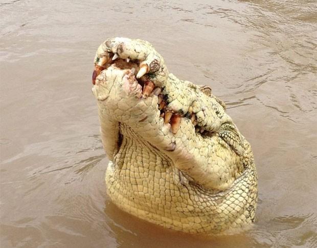 """Crocodilo """"Michael Jackson"""" é morto após devorar pescador"""