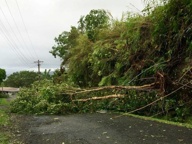Ciclone derrubou árvores em todo o país (Foto: Unicef Pacific / via AFP Photo)