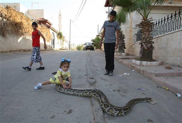 Uma menina foi fotografada em outubro de 2010 brincando com uma cobra enorme no meio de uma rua em Ramallah, na Cisjordânia. O réptil é mantidp como animal de estimação pela família palestina. (Foto: Abbas Momani/AFP)
