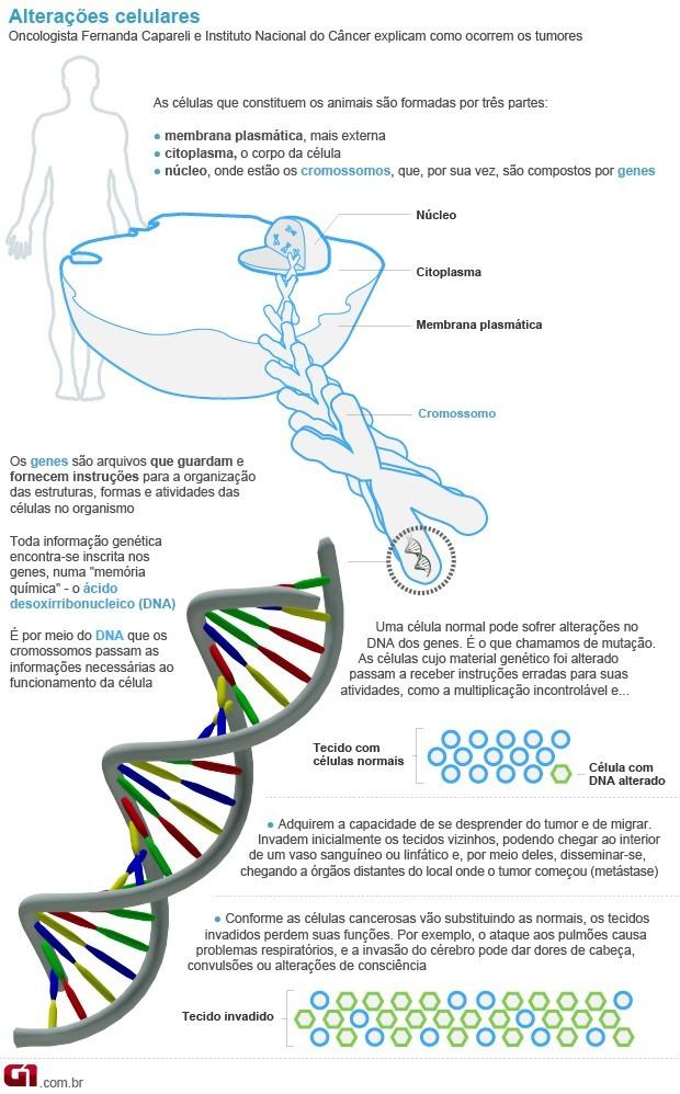 Infográfico câncer (Foto: G1)