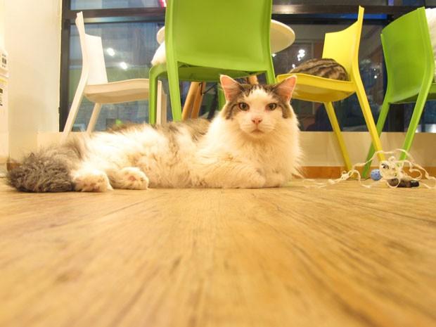 Tom´s Cat, café para gatos (e seus donos) em Seul, na Coreia (Foto: Daniela Braun/G1)
