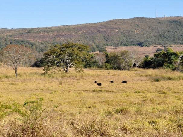Grandes áreas do Cerrado foram devastados com o avanço da agropecuária (Foto: Divulgação/ Lucas Conrado)