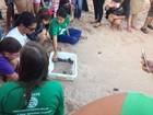 Instituto Biota realiza soltura de tartarugas na Praia da Sereia
