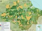 MT lidera desmatamento na Amazônia Legal em 11 meses, diz ONG