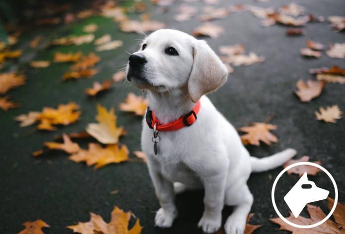 Hello terá teste de personalidade baseado em gosto, como apaixonados por pets (Foto: Divulgação/Hello)
