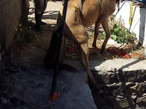 Animal ficou por mais de 24 horas no buraco (Foto: Divulgação / Corpo de Bombeiros)