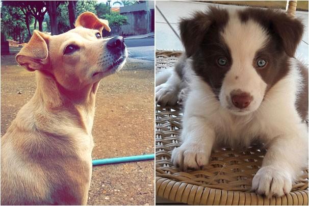 Telespectadores enviaram centenas de fotos para o Mania de Cão (Foto: Foto Cedida)