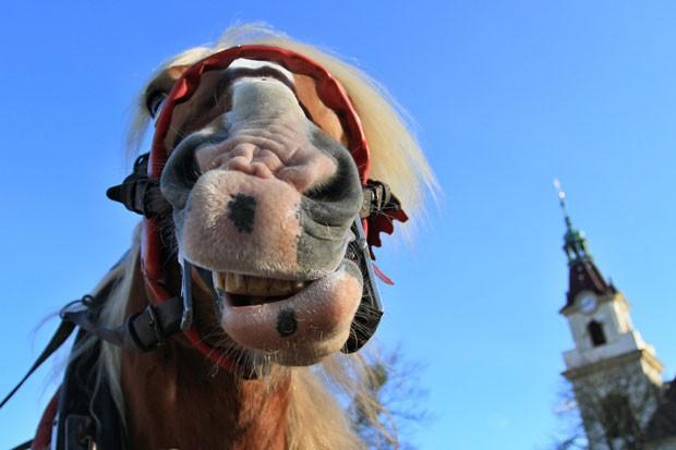 cavalo fez 'careta' ao ser fotografado na República Tcheca (Foto: Radek Mica/AFP)