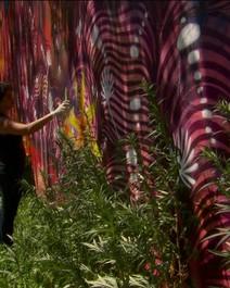 Grafite brasileira nos EUA