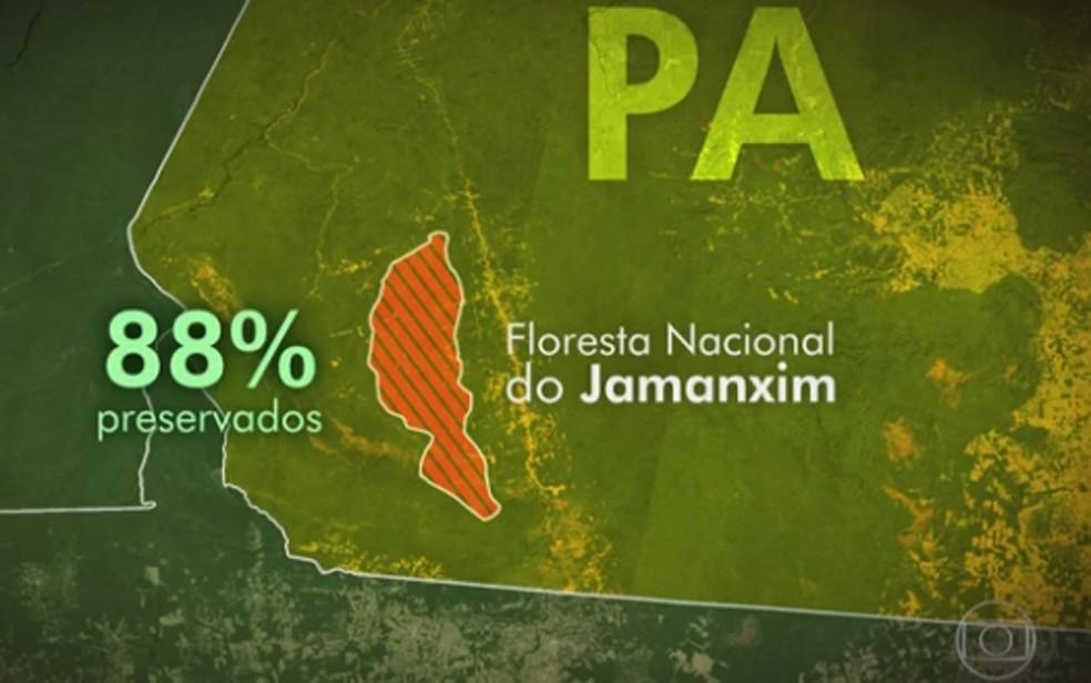 Em Jamanxim, no Pará, 88% da floresta está preservada (Foto: Reprodução/TV Giobo)