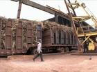 Começa a colheita de cana no centro-sul do país
