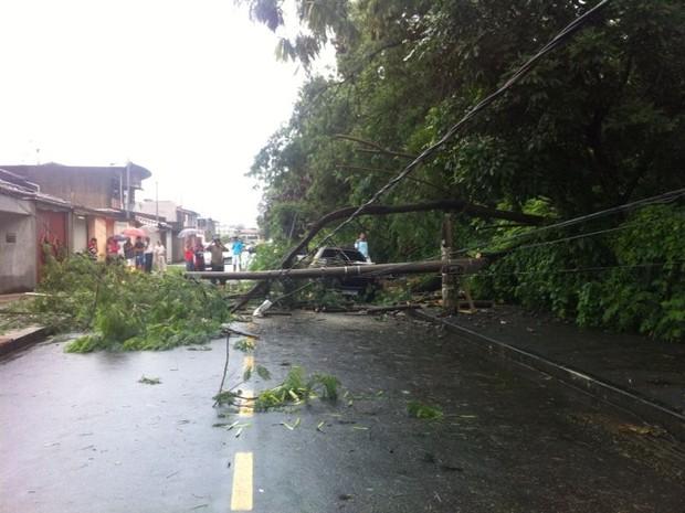 Em Timóteo, árvores e postes de energia foram derrubados pela chuva. (Foto: Joana Teles/InterTV)