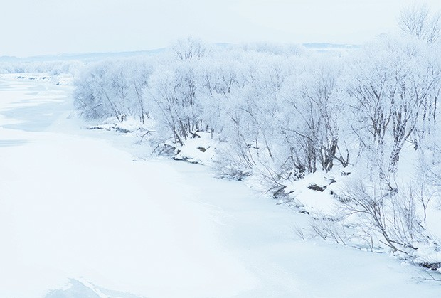 o inverno rigoroso de hokkaido pinta  o chão e as árvores de gelo (Foto: Shinpei Kato e Shin Watanabe)