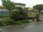 Árvore cai e causa congestionamento após forte chuva, em Ananindeua
