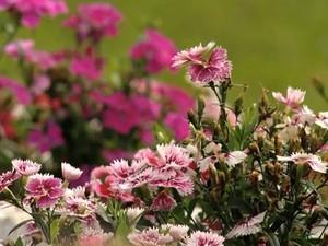 Flores são roubadas em canteiras de Santa Maria (Foto: Reprodução/RBS TV)