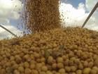 Grande volume de chuva compromete a colheita da safra de soja no Paraná