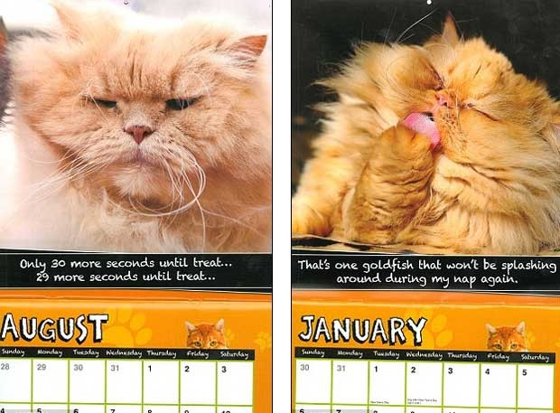 "Os ""gatos agosto e janeiro"