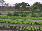 Professor e alunos cultivam produtos orgânicos no meio da caatinga no PI