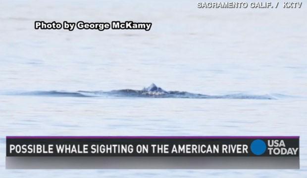 Americano flagra criatura estranha em rio na Califórnia