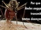 Nicarágua registra dois primeiros casos de transmissão de zika