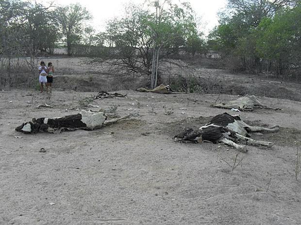 Rebanho morto em Itaíba, no Agreste de Pernambuco (Foto: Márcio Alves dos Santos / Acervo Pessoal)