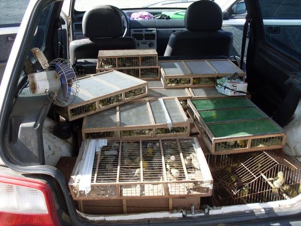 Aves eram transportadas do Paraná para a capital paulista (Fot Divulgação / Polícia Militar)
