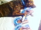 Cão de SP ganha troféus no mundial de surfe e até dorme com prêmio; veja