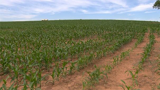 Plantio de milho safrinha é destaque do Fronteira do Brasil deste sábado (14) (Foto: Reprodução TV Fronteira)